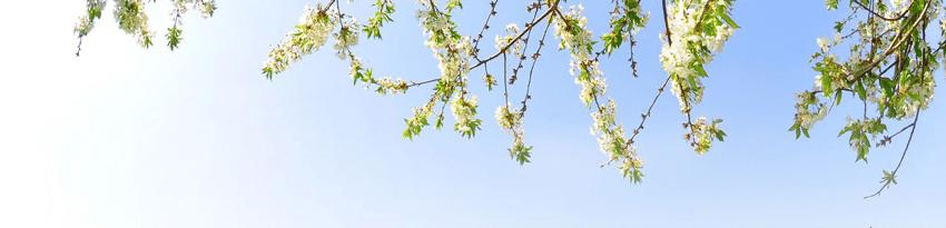 Forårs tilbud